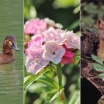biodiversité espèces écologie menace