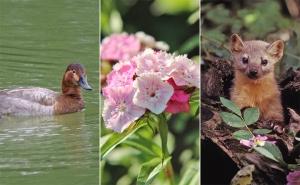 Biodiversité : arrêtons le carnage en Haute-Normandie !