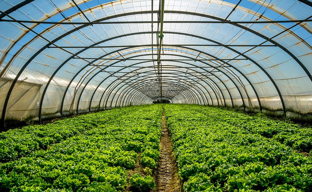 Serre salade écologie Bouger Bernay